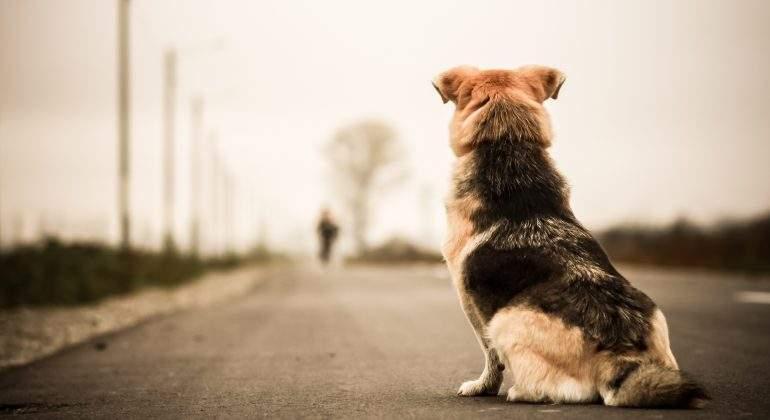abandonament maltracte animal
