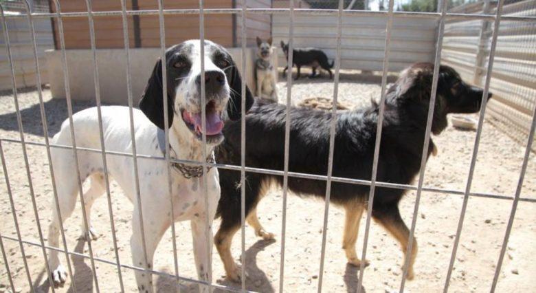 adopcio responsable d'animals a Reus