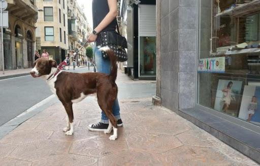 licitació recollida animals Reus