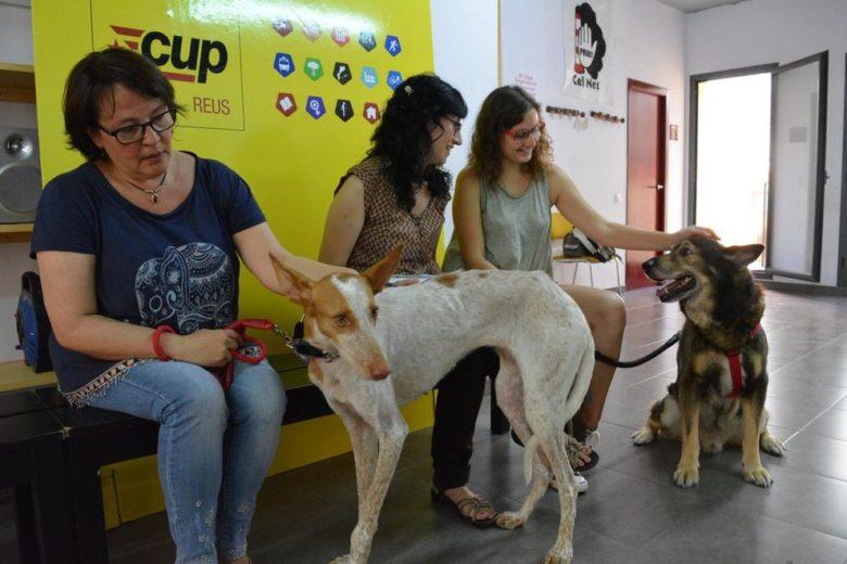 Comissió en defensa del benestar animal de la Cup