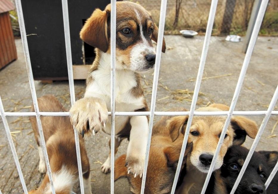 Opacitat en la licitació de recollida d'animals a Reus