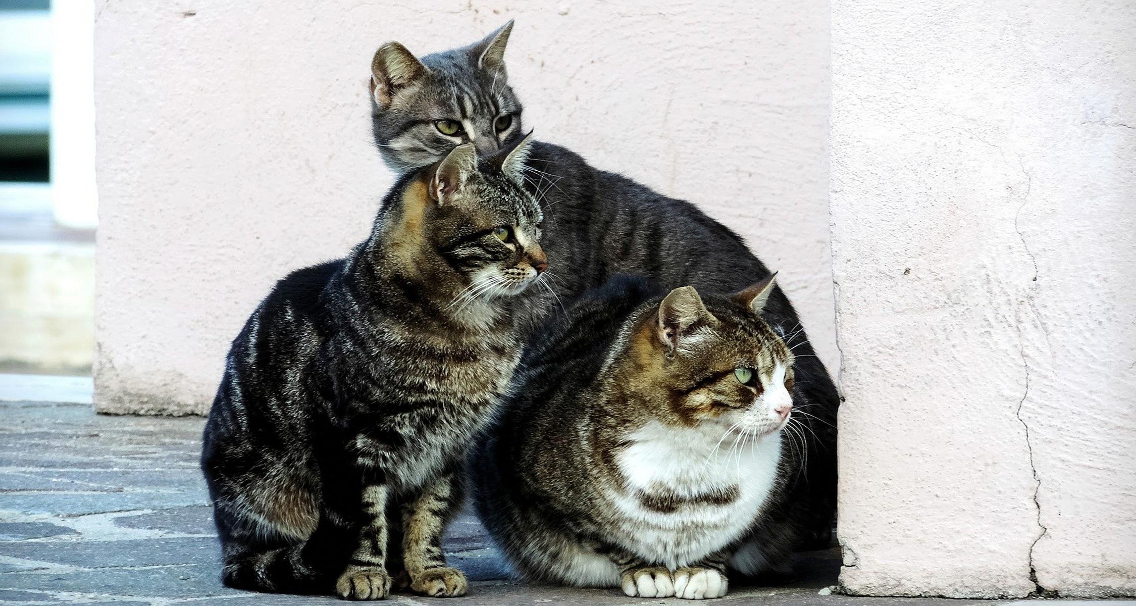 gestio colonies felines ajuntament reus